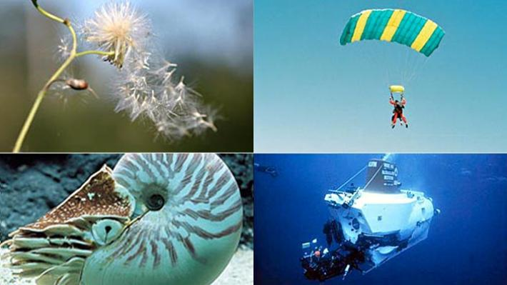 eng06_int_biomimicry.jpg.resize.710x399